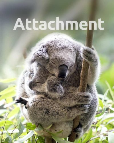 attachment-450x600