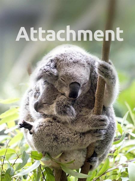 attachment-450x600