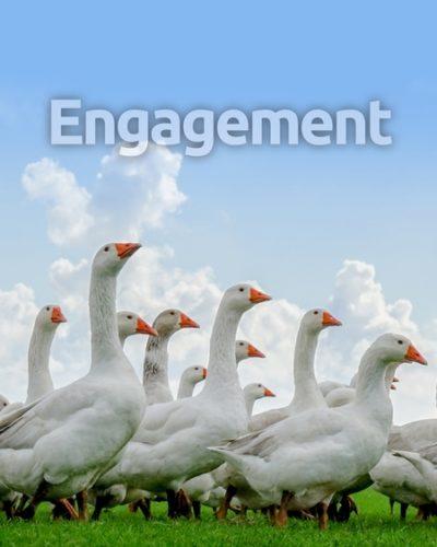engagement-450x600