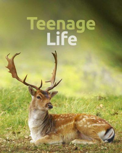 teen_life-450x600