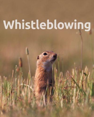 whistle-450x600