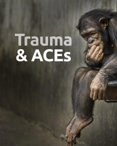 trauma-450x600